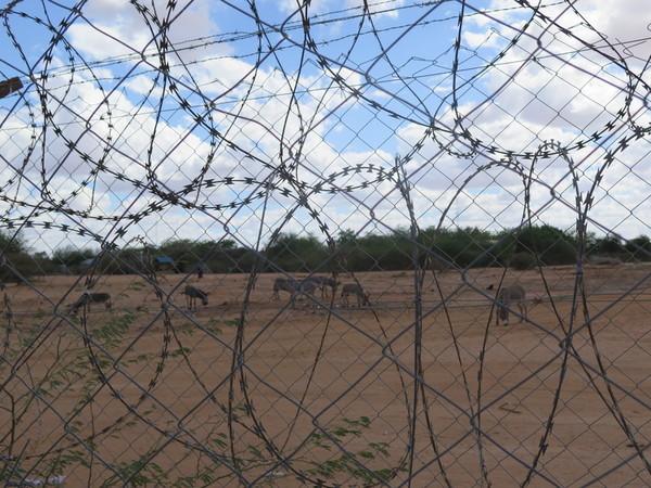 Somálští uprchlíci v Keni: nejistá budoucnost